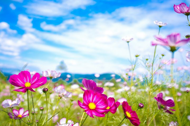 Summer-Flowers-Wallpapers